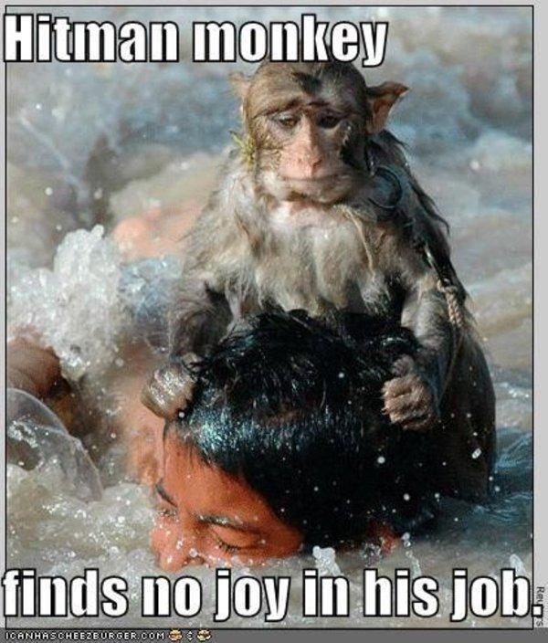 Hitman Monkey Know Your Meme