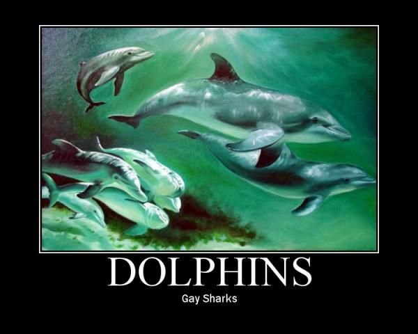 dolphins glee Gay