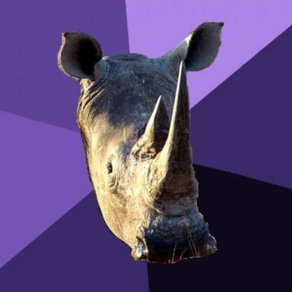 sexually oblivious rhino know your meme