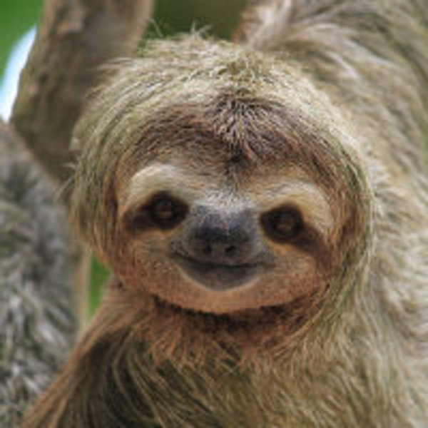 Sloths | Know Your Meme