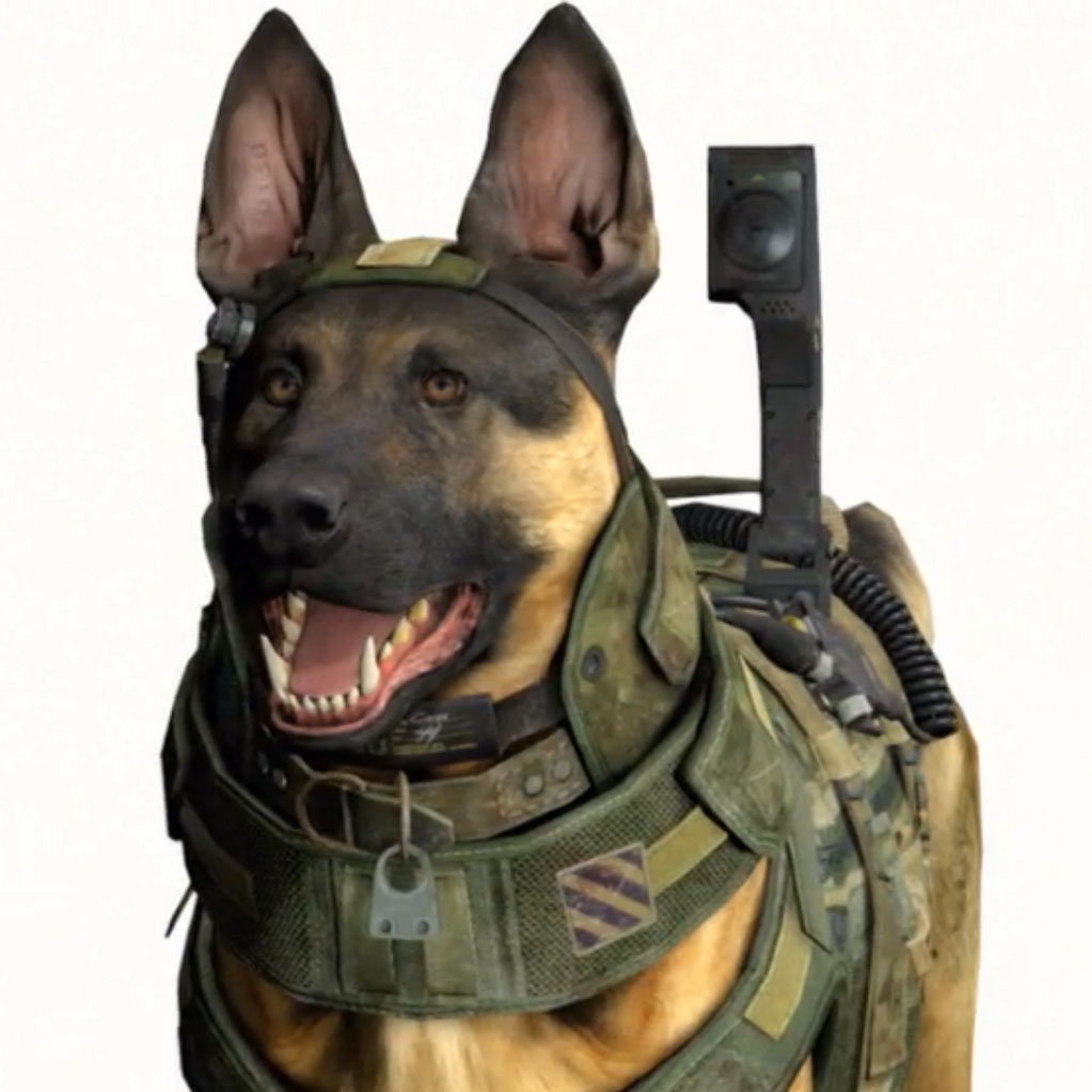 Call of Duty Dog | Know Your Meme
