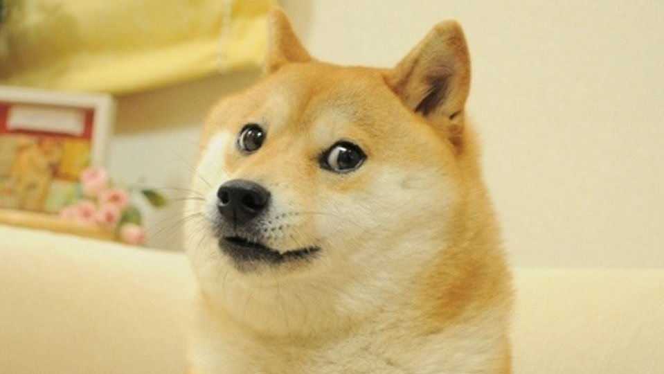 Doge | Know Your Meme Doge Up on