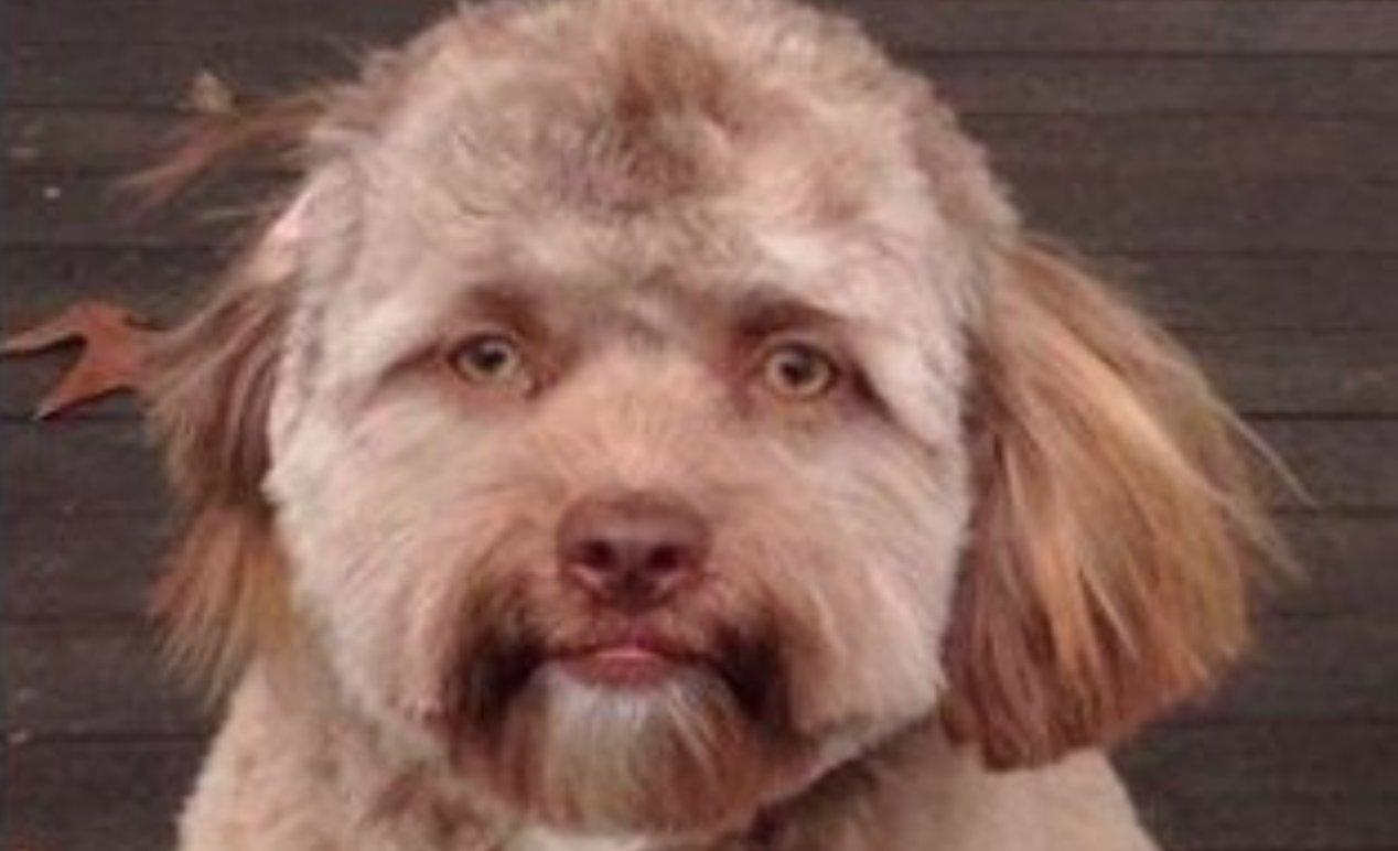 dog that looks human - HD1396×785