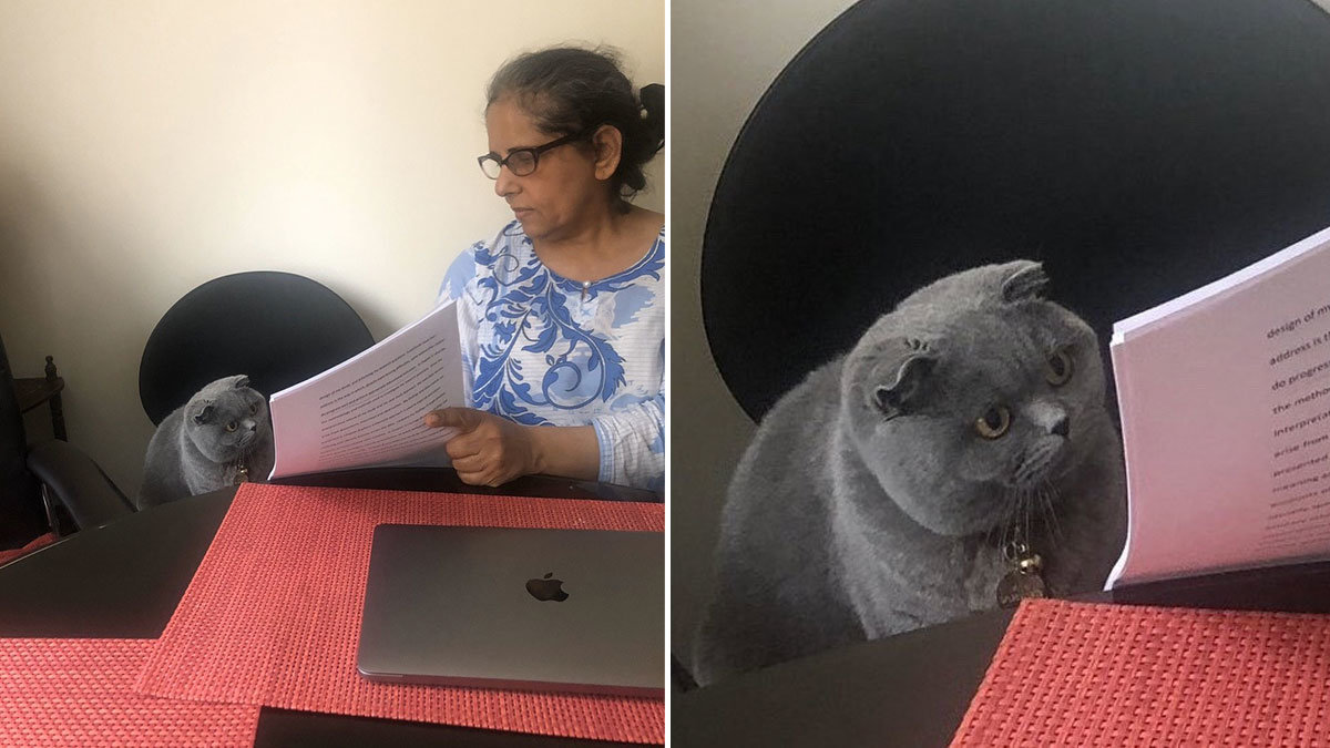 Woman Showing Papers to Grey Cat