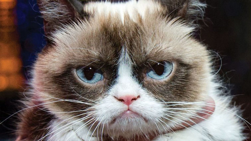 Grumpy Cat Know Your Meme