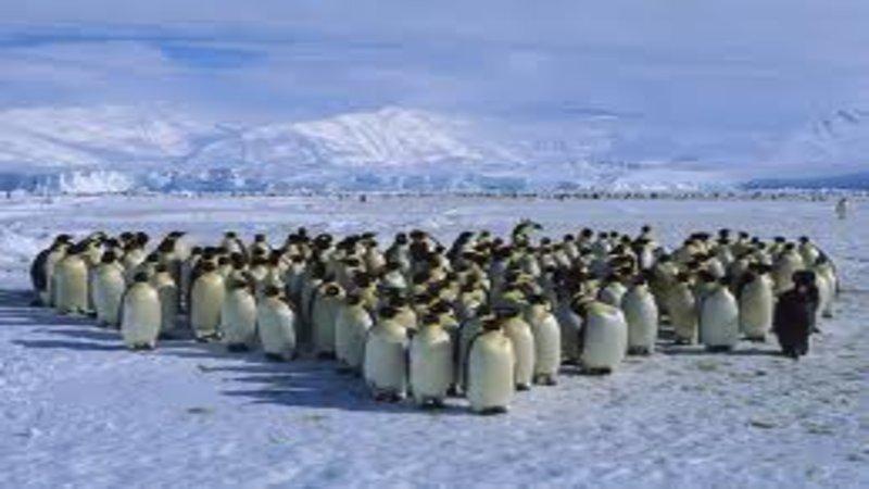 Penguins Know Your Meme