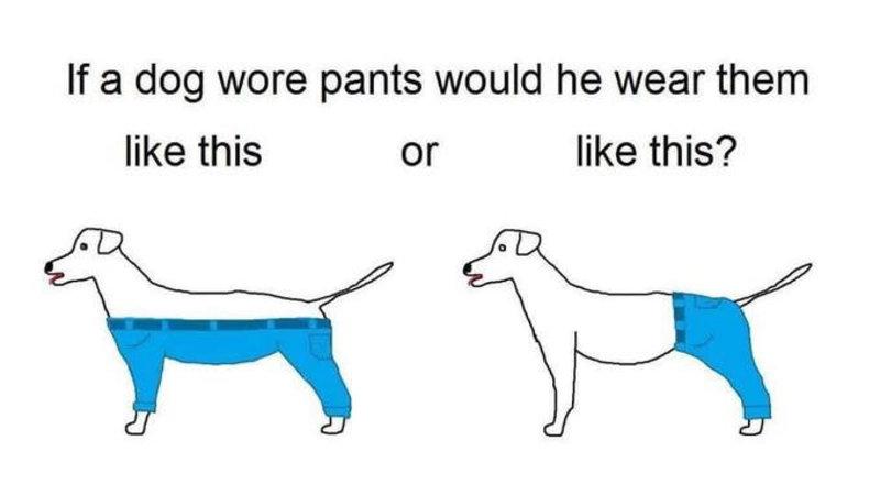 If a Dog Wore Pants  f1dc37dec86d