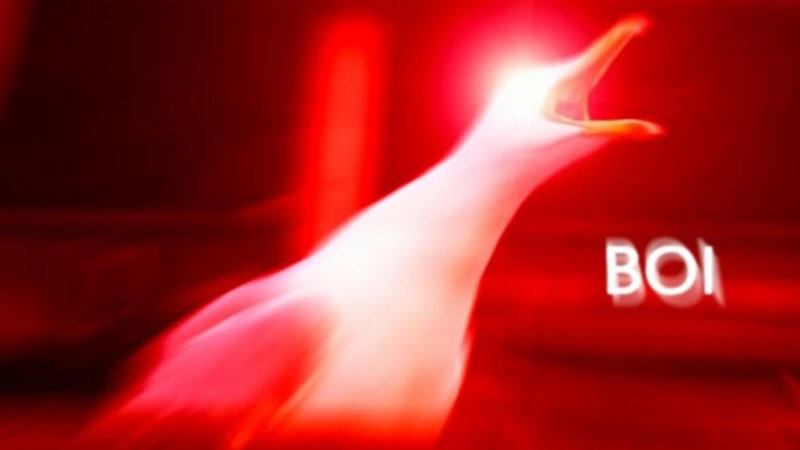 Inhaling Seagull Know Your Meme