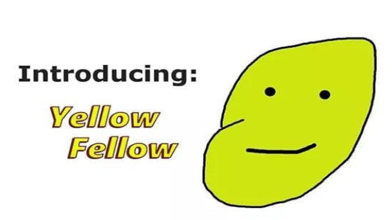 Yellow_fellow