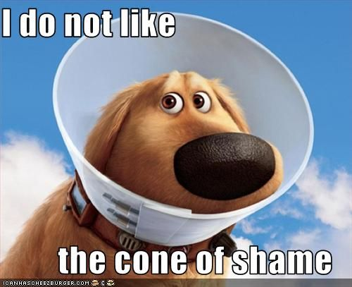 cone of shame know your meme