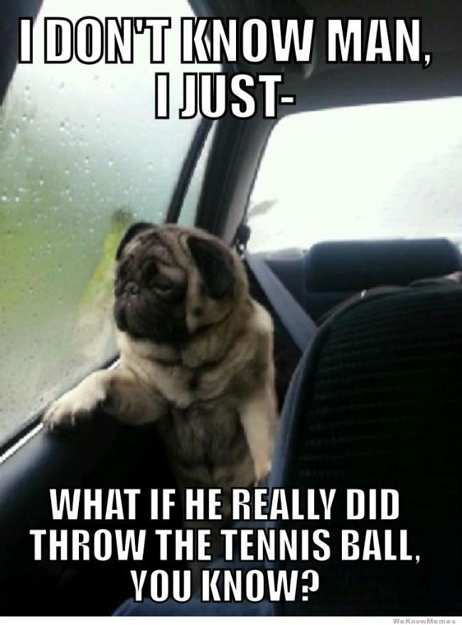 introspective pug know your meme