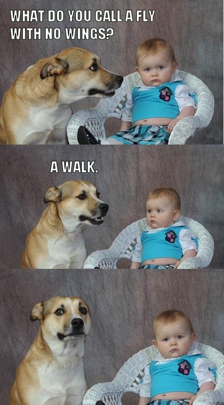 Dad Joke Dog | Know Your Meme