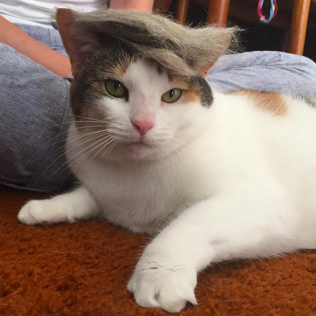 Trump Your Cat Know Your Meme