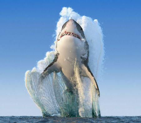 national geographic great white shark photo know your meme