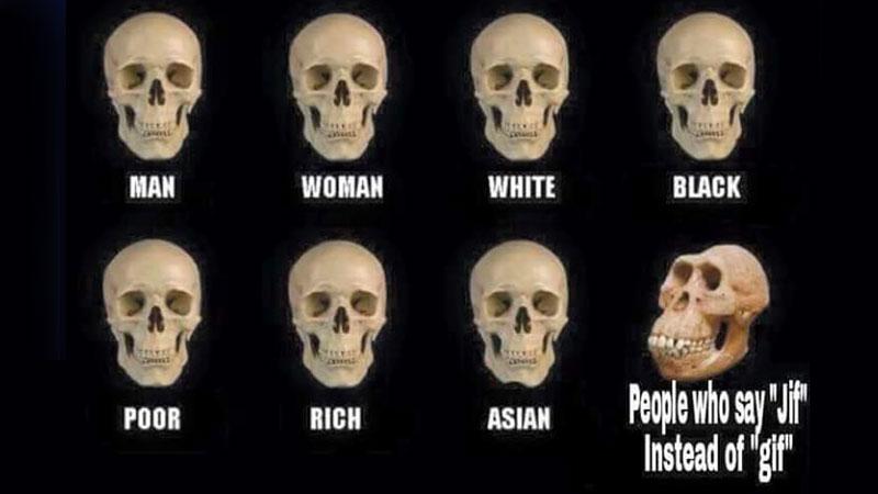 Skull Comparisons Know Your Meme