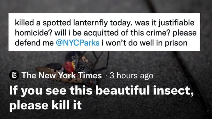 new york times lanternfly article