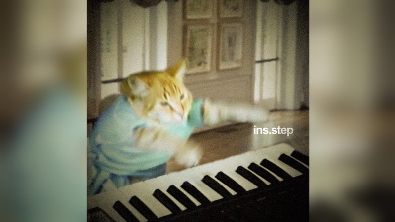 Mozart Cat Goes Off