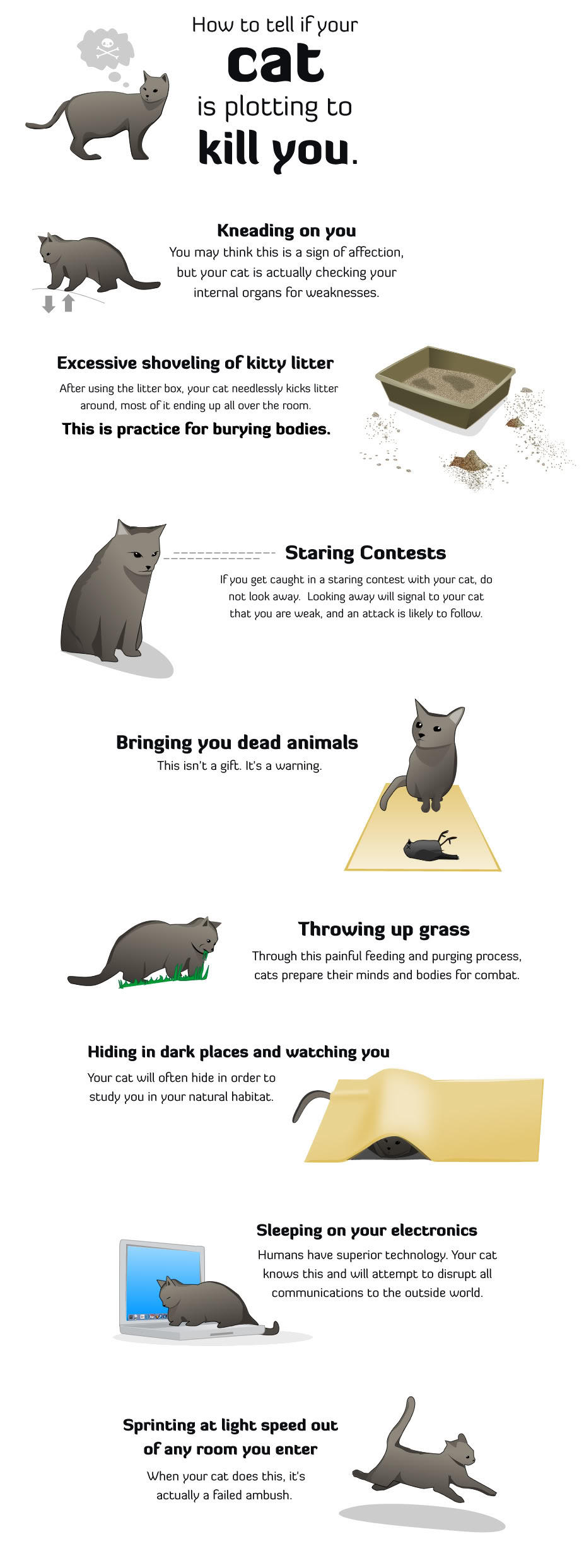 How to Tell if Your Cat Is Trying to Kill You. | Cats | Know Your Meme