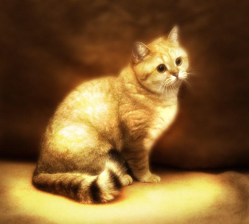 Image - 709023] | Starecat / Grafics Cat | Know Your Meme