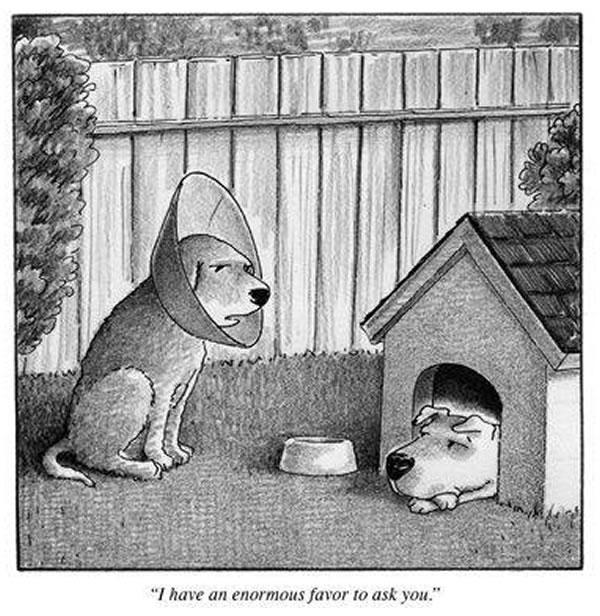 rejected new yorker cartoon dogs know your meme