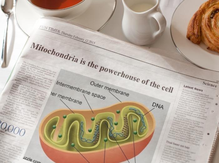 The Mitochondria is the Powerhouse of the Cell | Morning News | Know