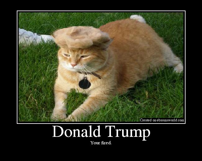 Original Donald Trump Cat Toupee Trump Your Cat Know Your Meme