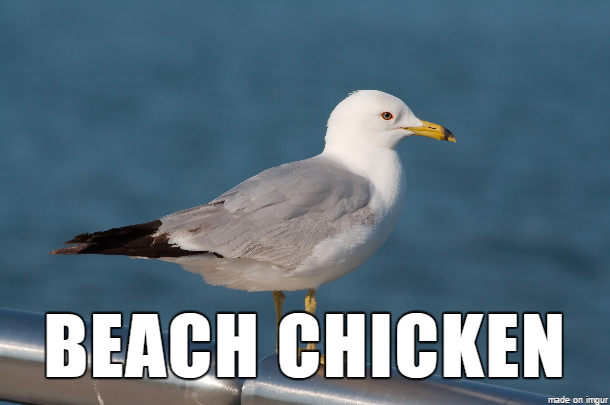seagull better names for things know your meme