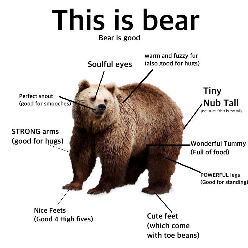 This is bear. Bear is good. | Proper Anatomy | Know Your Meme