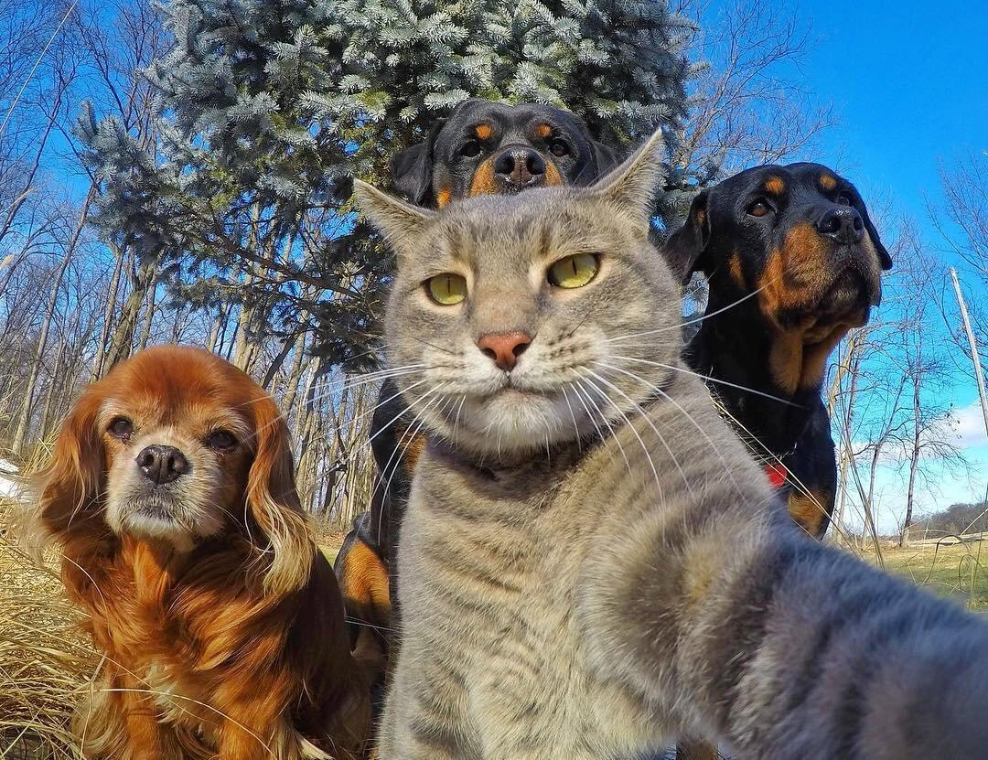 Прикольные коты и собаки картинки, гифки