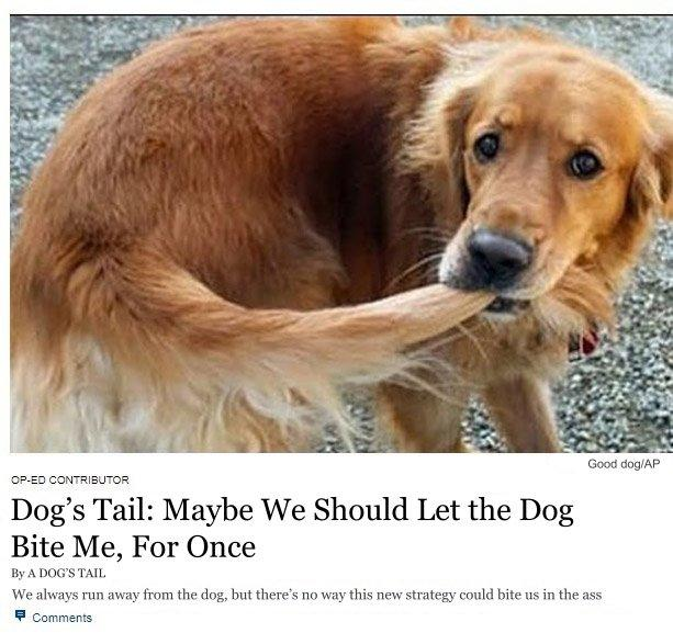 dog's tail: maybe we should let the dog bite me, for once | New York