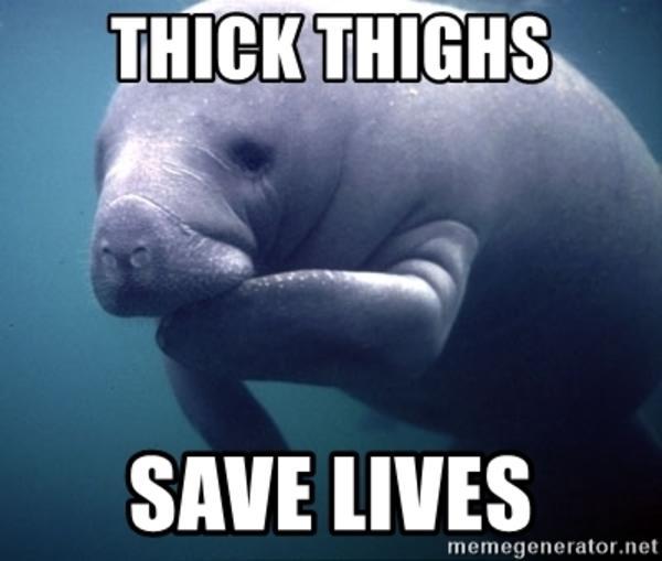 Manatee Thick Thighs Save Lives Know Your Meme Follow my back up @ugly.ginger.memes.v2 dankmemes cringe meme memes nicememe lmao lol kek lmfao immortalmemes filthyfrank 4chan ayylmao w. manatee thick thighs save lives