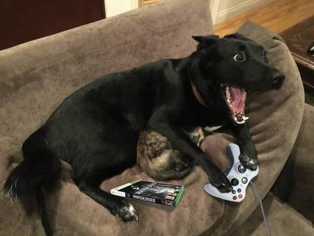excited gamer dog dogs know your meme