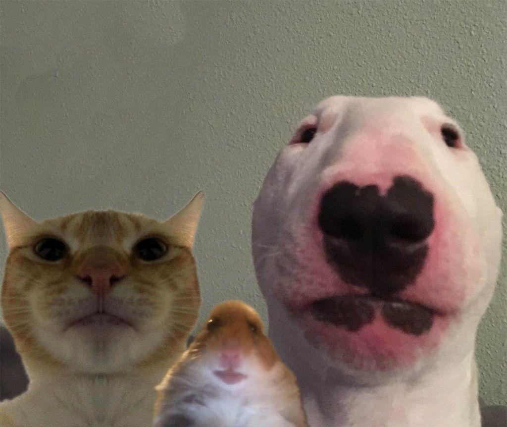 Staring Trio Staring Hamster Know Your Meme