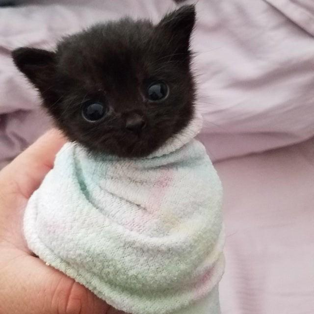 The Littlest Burrito Cats Know Your Meme