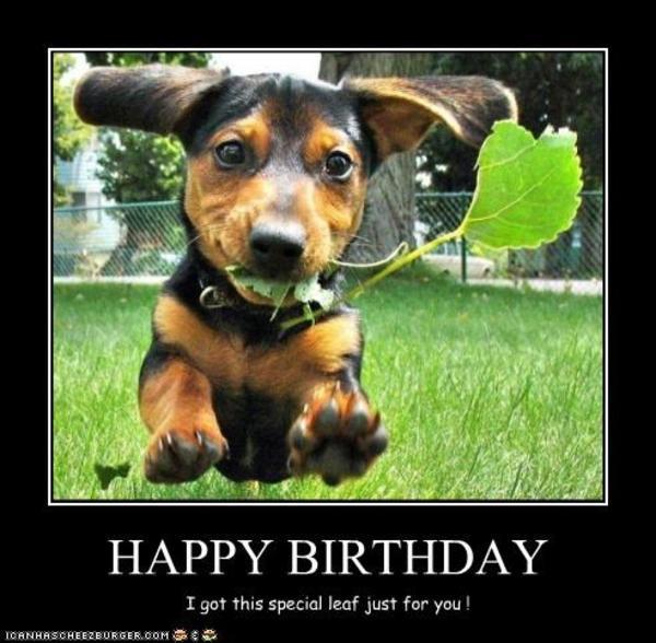 HAPPY BIRTHDAY | Dogs | Know Your Meme