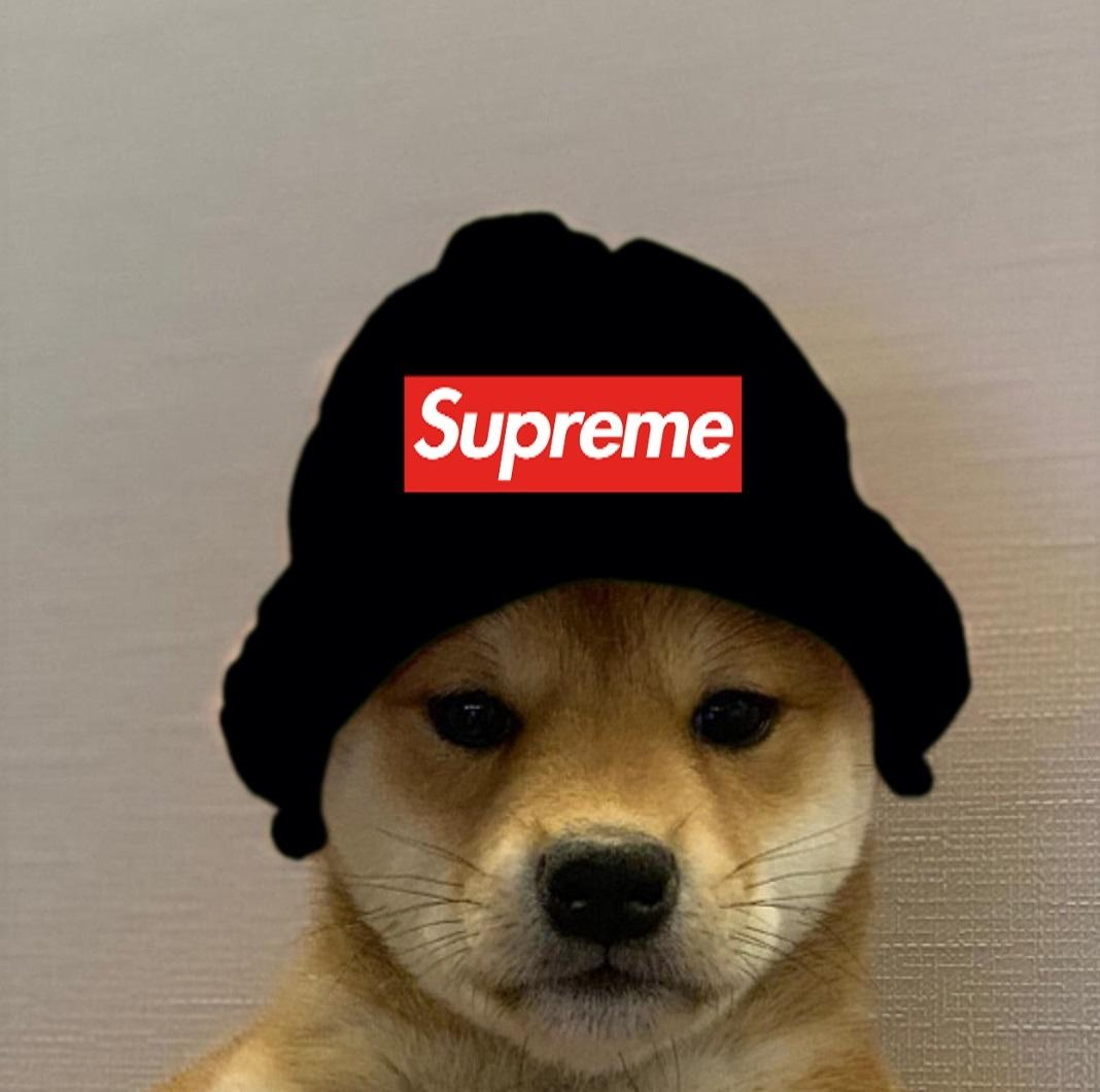 SUPREME Dogwifhat | Dogwifhat | Know Your Meme