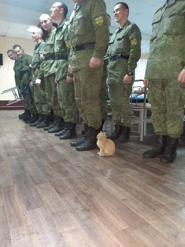 Military Cat R Hmmm Know Your Meme