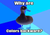 Image 27337 Technologically Impaired Duck Know Your Meme