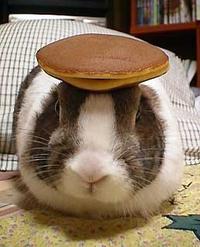 Pancake Tea Rabbit Domestic Rabits And Hares