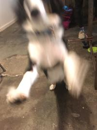 Blurry Dogs | Know Your Meme