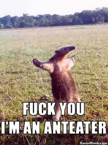 Fuck you i am an anteater pics