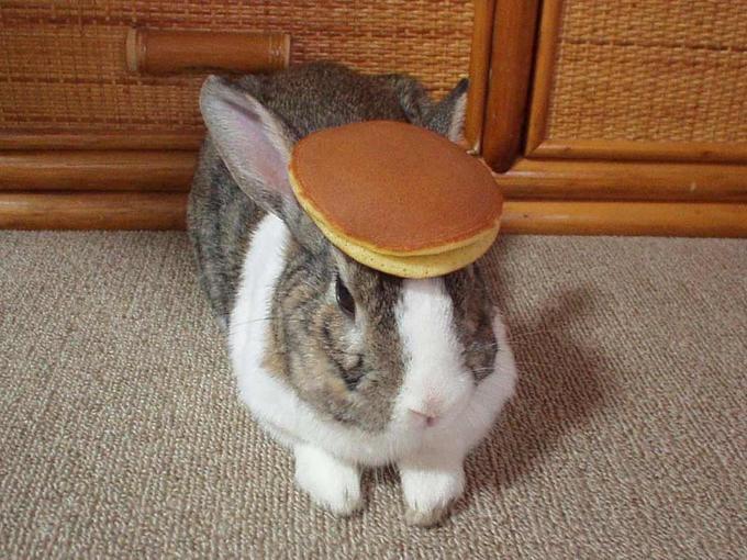 LARA-JEAN KIM - #(456) 666-0235 Pancake_bunny