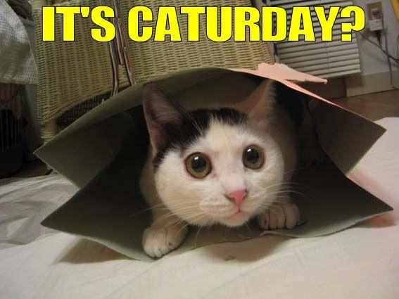 Image result for caturday
