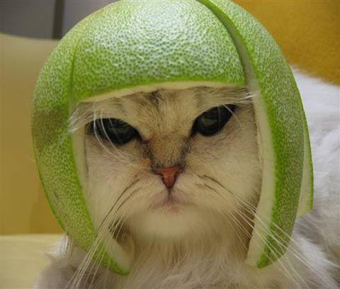 limecat know your meme