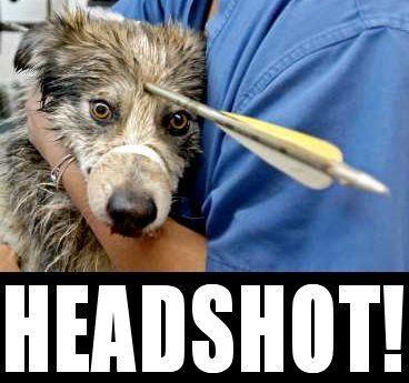 Image 16185 Boom Headshot Know Your Meme