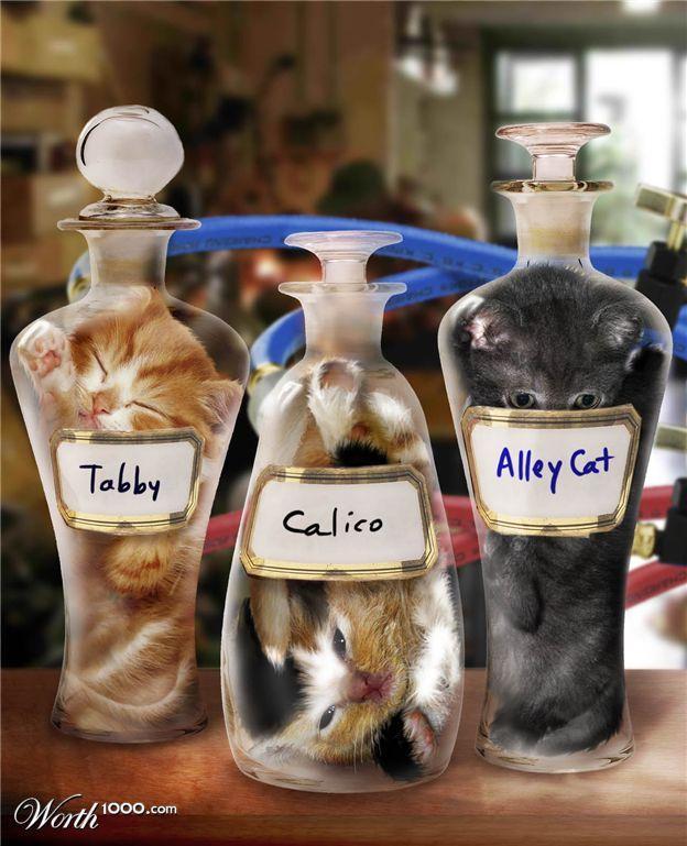 Bonsai Kittens | Know Your Meme