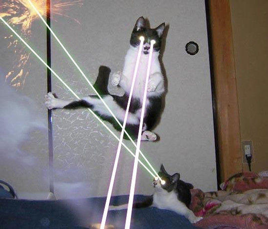 Image result for cat with a gun meme