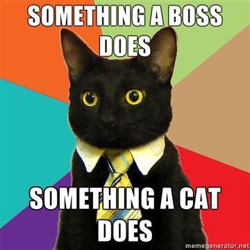 Business Cat Know Your Meme