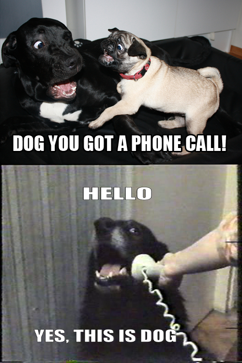 Yes This Is Dog Know Your Meme