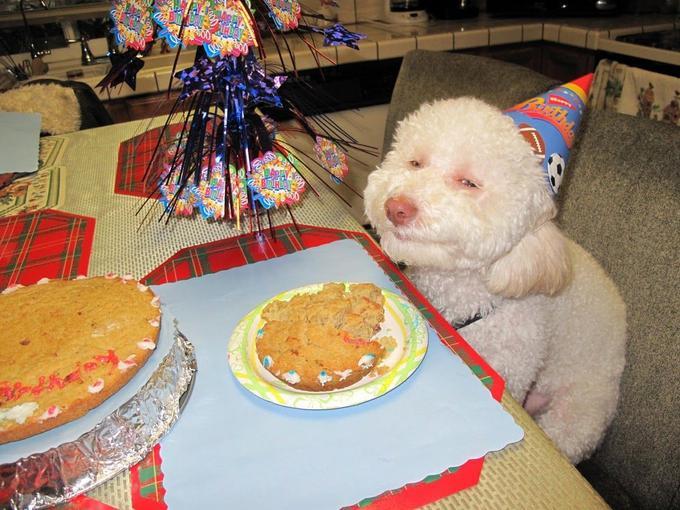 High Smiling Birthday Dog